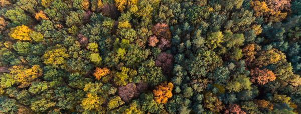 Drönarbild över höstskog.