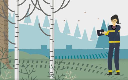 Bild från filmen på skogskonsulent i skogen